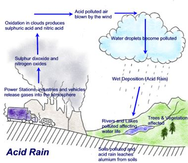 research question on acid rain Acid rain research - experienced scholars, quality services, fast delivery and other advantages can be found in our writing service instead of concerning about dissertation writing find the needed assistance here put aside your fears.